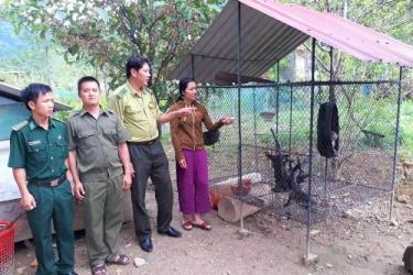 Hạt Kiểm lâm VQG Phong Nha – Kẻ Bàng vận động người dân giao nộp cá thể Khỉ vàng